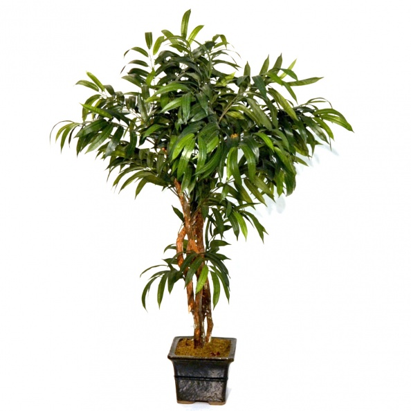 Tree- Green Leaves, Black Ceramic Pot