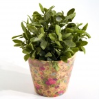 Plants & Floral Arrangements- Tabletop
